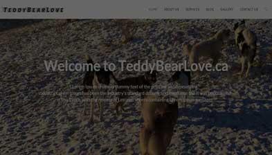 trady-bear
